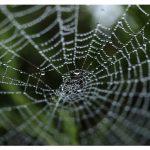 Responsive Webdesign, Webseiten mit WordPress